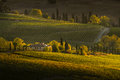 VAL D`ORCIA, TUSCANY/ITALY - Vineyard In Val D`Orcia Royalty Free Stock Photo - 97839025