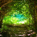 Magical Forest With Path To The Light Stock Photography - 97844672