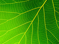Leaf Texture Royalty Free Stock Images - 97897279