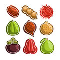 Vector Set Icons Of Colorful Exotic Fruits Royalty Free Stock Image - 97898256