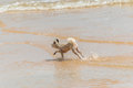 Dog Running Happy Fun On Beach When Travel At Sea Royalty Free Stock Images - 97926589
