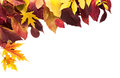Fall Season Background, Yellow Maple Leaves Stock Photos - 97957363