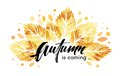 Watercolor Painted Autumn Leaves Banner. Fall Background Design. Vector Illustration Stock Photography - 97973382
