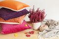 Colorful Cushions Throw Cozy Home Autumn Mood Flower Stock Images - 97973774