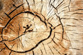 Tree Circles Stock Images - 97998394