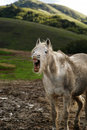 Laughing Horse Stock Photos - 982383