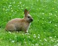 Rabbit In Meadow Royalty Free Stock Photo - 983855