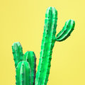 Cactus. Art Gallery Fashion Design. Minimal Royalty Free Stock Photography - 98009167