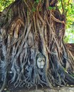 Buddha Head In Tree Roots Royalty Free Stock Photography - 98128377