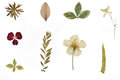 Dried Flowers And Herbarium Stock Images - 98133494
