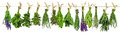 Drying Herbs  Royalty Free Stock Images - 98205519
