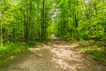 View Of Natural Fresh Green Forest With Trail, Path, Landscape In Ontario Halton Hills Stock Images - 98328664
