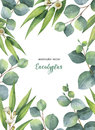 Watercolor Vector Green Floral Card With Eucalyptus Leaves And Branches  On White Background. Stock Image - 98350301