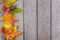 Fall Season Background, Yellow Maple Leaves Royalty Free Stock Image - 98369446