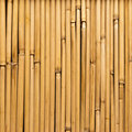 Bamboo Reeds Royalty Free Stock Photography - 9841617