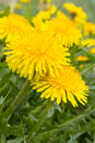 Close-up Of Dandelion Royalty Free Stock Image - 9844366