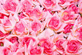 Roses Royalty Free Stock Photography - 9849907