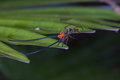 Beautiful Spider Long Horn On The Leaf Royalty Free Stock Photo - 98409705