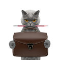 Cute Office Worker Businessman Cat With Suitcase Or Bag Isolated On White Stock Images - 98431384