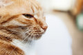 Red Cat, Close-up Portrait Of The Head, Squinted In The Sun And Royalty Free Stock Photos - 98439668