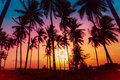 Silhouette Coconut Palm Trees On Beach At Sunset. Stock Image - 98493751