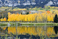 Golden Aspens And Reflections Royalty Free Stock Image - 9857646