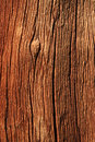 Weathered Trunk Detail Royalty Free Stock Image - 9858506