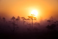 A Beautiful, Dreamy Morning Scenery Of Sun Rising Above A Misty Marsh. Colorful, Artistic Look. Stock Photo - 98509760