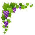Grape With Leaf Corner Decoration For Autumn Harvest Royalty Free Stock Image - 98558696