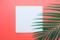 Tropical Palm Leaves With White Paper Card Frame On Pastel Royalty Free Stock Images - 98646209