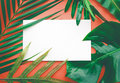 Real Leaves With White Copy Space Background.Tropical Botanical Royalty Free Stock Image - 98646606
