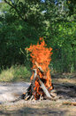 Hot Camp Fire Stock Photography - 98650372