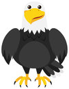 Eagle With Happy Face Royalty Free Stock Photography - 98654327