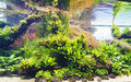 Planted Aquarium Royalty Free Stock Image - 98693276