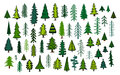 Cute Abstract Conifer Evergreen Pine Fir Christmas Needle Trees Royalty Free Stock Images - 98719329