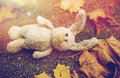 Toy Rabbit And Autumn Leaves On Road Or Ground Royalty Free Stock Image - 98866316