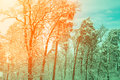Snowy Forest At Sunrise Stock Photos - 98872013
