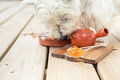 Candy Lollipop And Dog Sniffing Teapot On Wooden Background Stock Image - 98911711