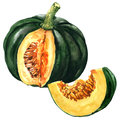 Green Pumpkin With Slice, Autumn Vegetable Isolated, Watercolor Illustration On White Royalty Free Stock Image - 98950426