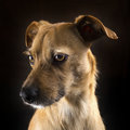 Dog Portrait Royalty Free Stock Photos - 98951978