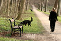 Walking The Dog Royalty Free Stock Photography - 995947