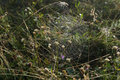 A Spider Web With Some Dew Early In The Morning With The Sun Rays Stock Photos - 99008223