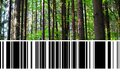 Forest With Barcode Royalty Free Stock Photography - 99013967