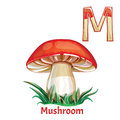 Vector Alphabet Letter M, Coloring Page. Mushroom Stock Photo - 99042350