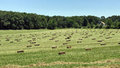 Hay Bales In Field Royalty Free Stock Photo - 99057495