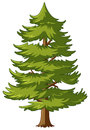 Pine Tree With Green Leaves Stock Photography - 99084012