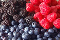 Berries, 3 Kinds Royalty Free Stock Photo - 9917695