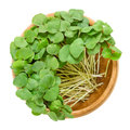 Buckwheat Microgreens In Wooden Bowl Stock Images - 99111494