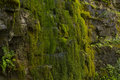 Green Moss On Rock Wall - Stock Photo Royalty Free Stock Images - 99154269