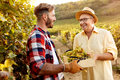 Young Grape Harvest-smiling Father And Son Working At Vineyard Stock Images - 99177454